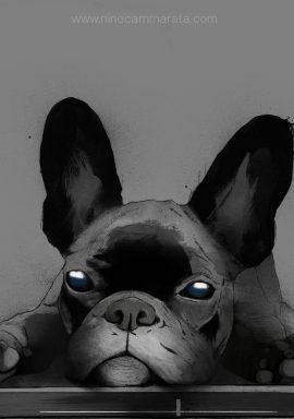 bulldog_particolare_©NinoCammarata